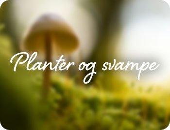 Planter og svampe - tile